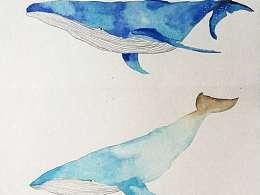 鲸鱼君图标