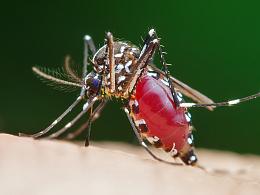 微距摄影【蚊子】