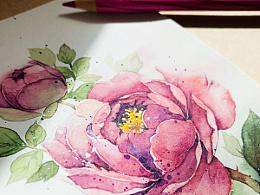 水彩花卉练笔--玫瑰