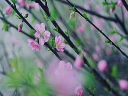 三月末的春色