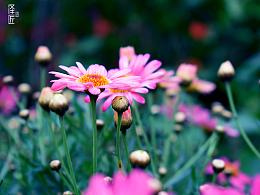 花卉世界的小清新