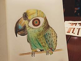 彩铅临摹鹦鹉
