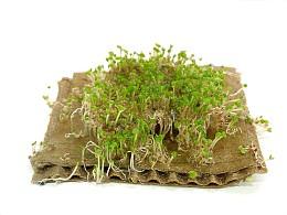 废物利用——绿植瓦楞纸