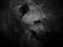 动物肖像黑白纪实摄影