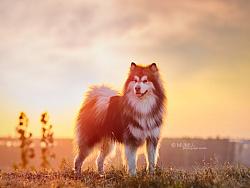 阳光下的狗