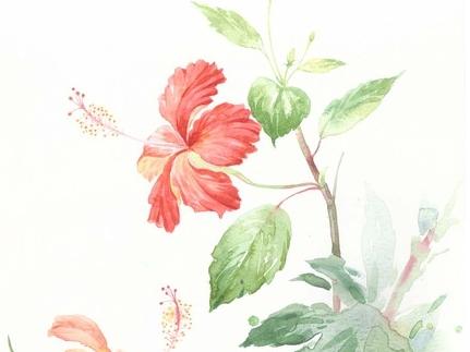 水彩植物写生步骤