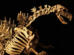 狼先生GK涂装作品(笔涂)| Godzilla Skeleton