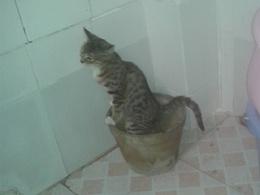 爱干净的喵喵