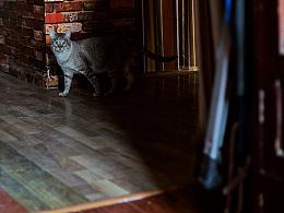 做家客栈的猫