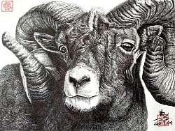 动物~钢笔画