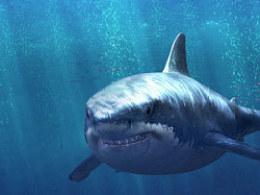 鲨鱼制作教程