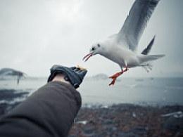 【新技能get√】关于怎么喂海鸥&怎么拍海鸥