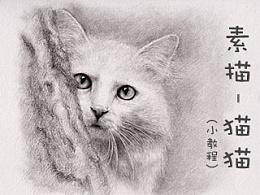 躲在背后的《渴望》(素描-猫猫)