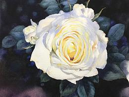 阳光树影中的白玫瑰(超详细教程)