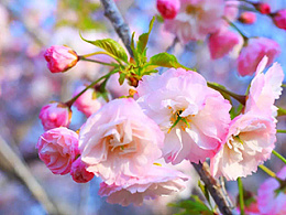人看花,花看人-李佛君设计展将与大连樱花节同期绽放