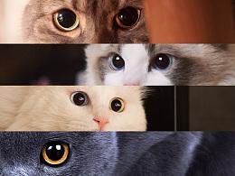 如何拍摄出猫咪的极致美瞳