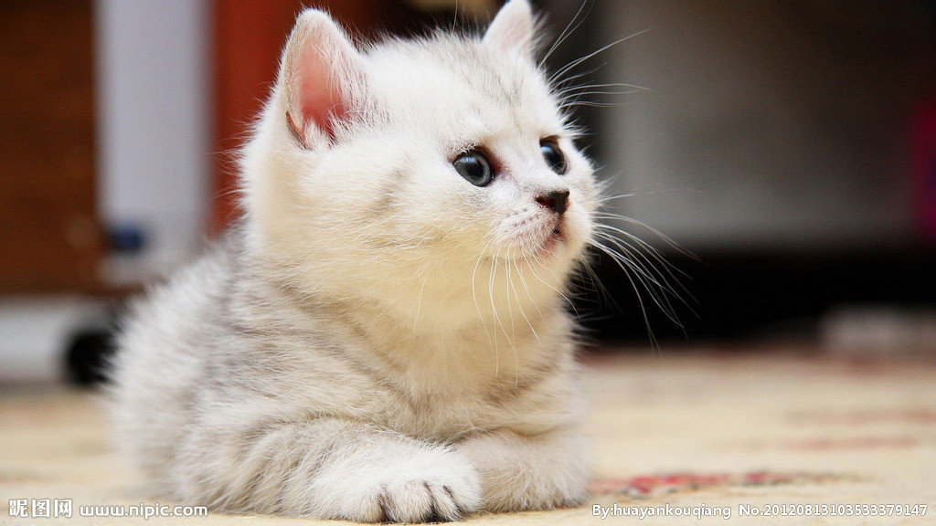 壁纸 动物 猫 猫咪 小猫 桌面 1024_576