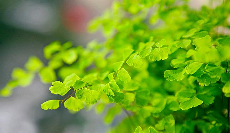 手绘风吹树叶素材