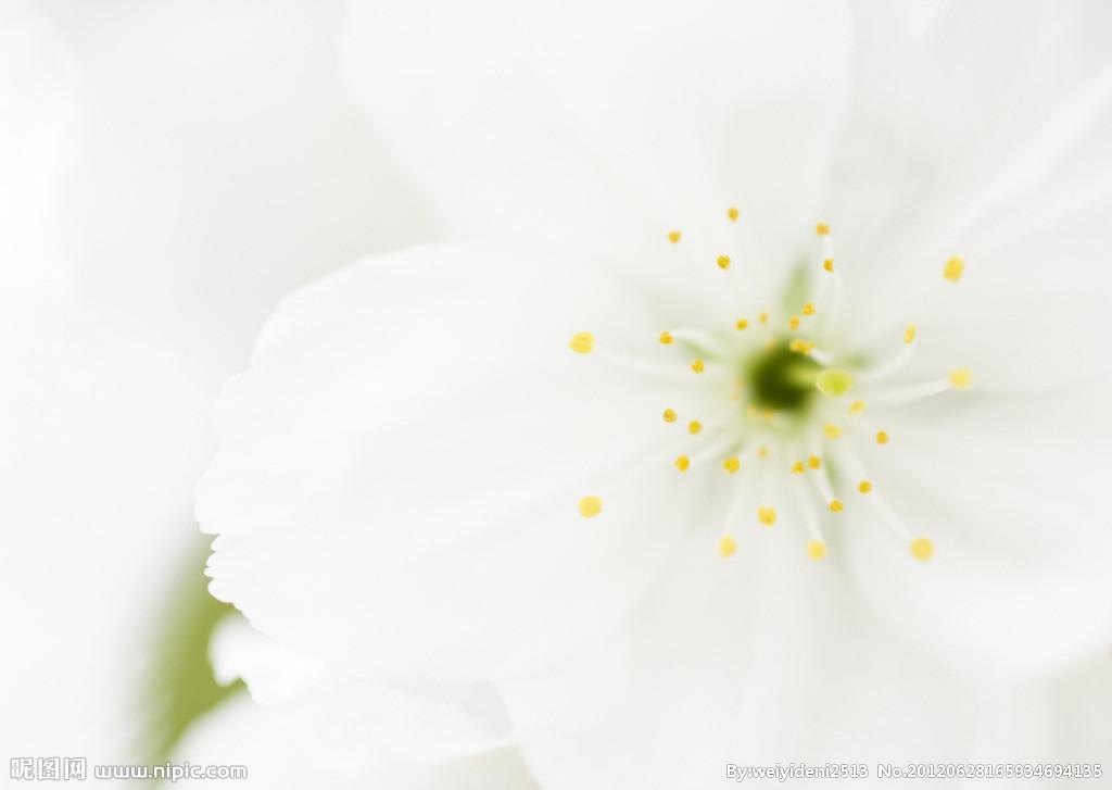 淡雅白色花朵素材