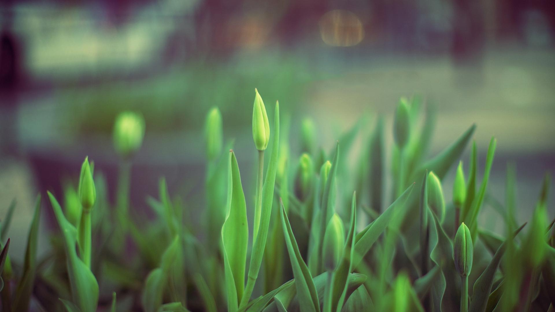 壁纸 草 绿色 植物 桌面 1920_1080