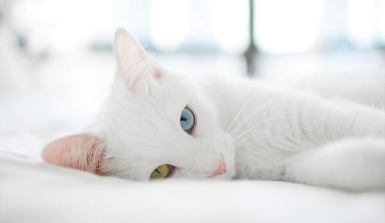 壁纸 动物 猫 猫咪 兔子 小猫 桌面 750_435