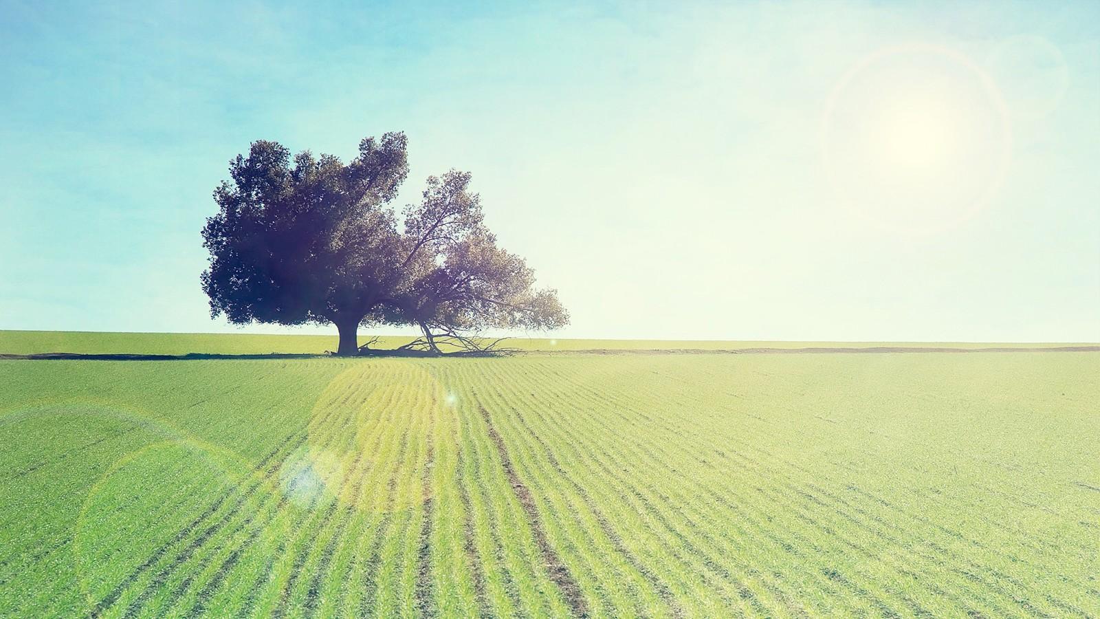 小清新风景纵向
