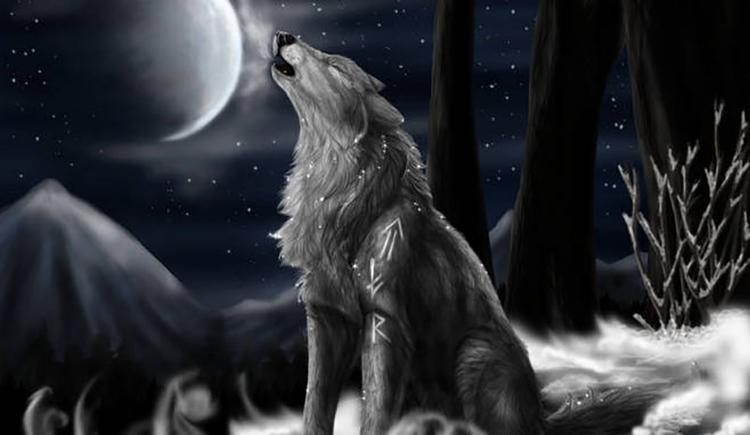 孤狼啸月159357