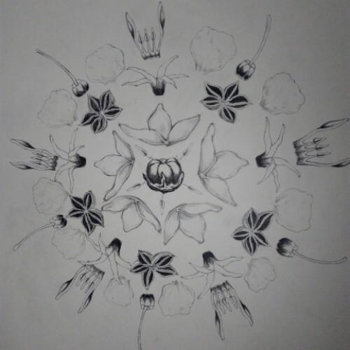 梨花图片简笔画手绘